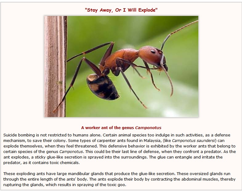 Ants, and  suicide bombers Unbeli10
