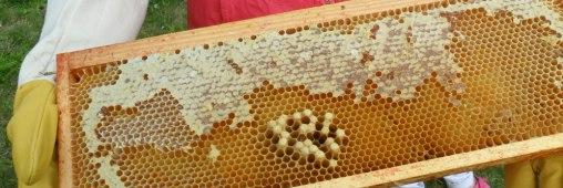Des micro-plastiques partout, même dans le miel !! Abeill10