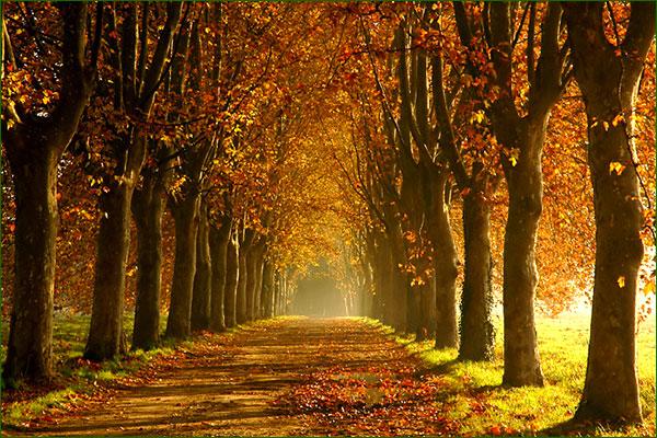 Pour bien vivre l'automne Foryt10