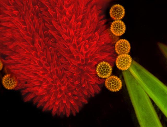 La vie est une splendeur ! Pollen10