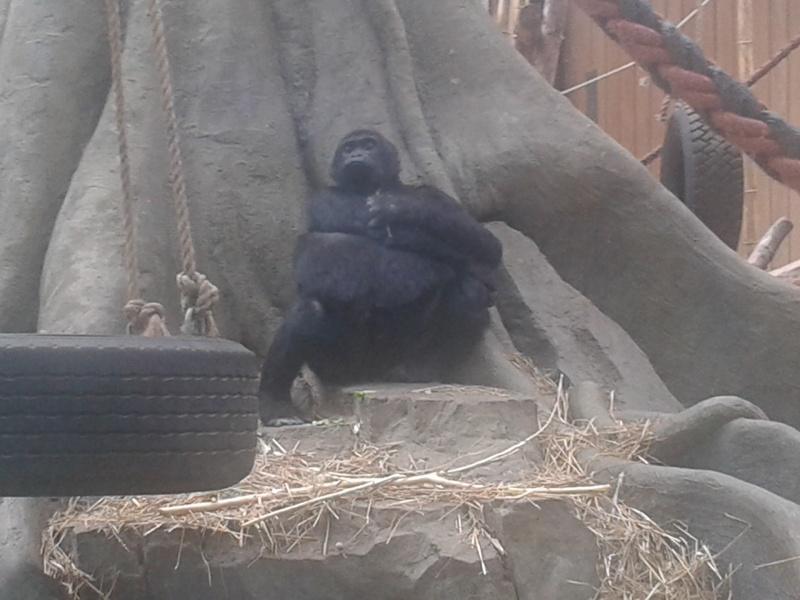 Sortie au zoo d Envers 20140718