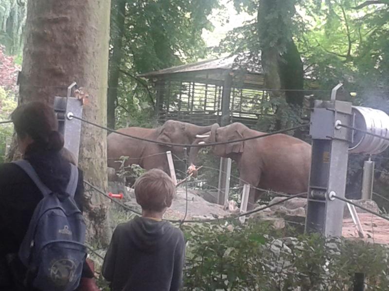 Sortie au zoo d Envers 20140719
