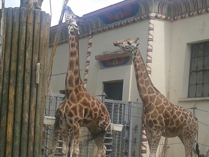 Sortie au zoo d Envers 20140720