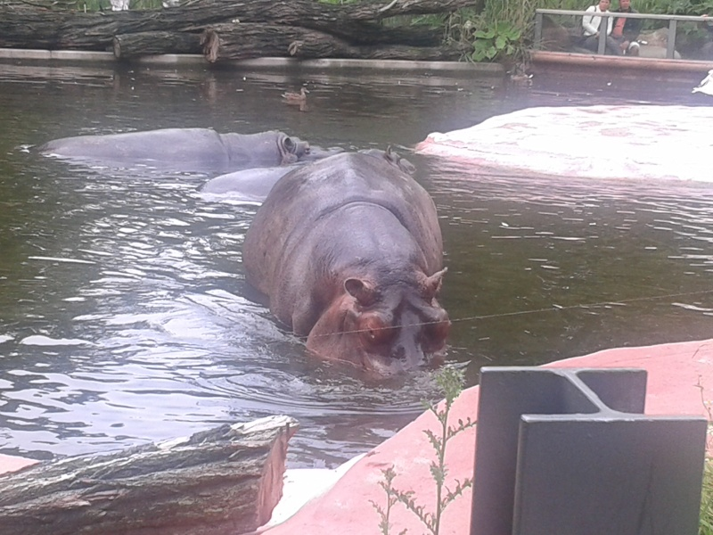 Sortie au zoo d Envers 20140721
