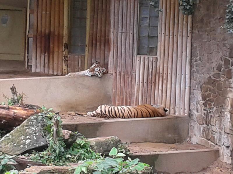 Sortie au zoo d Envers 20140724