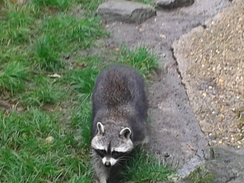 Sortie au zoo d Envers 20140725
