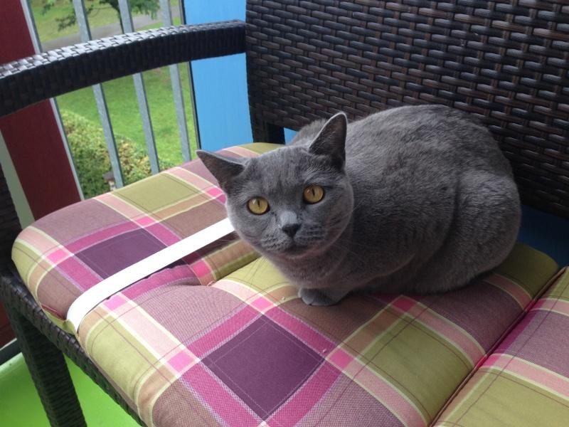 Miau... 2014-011