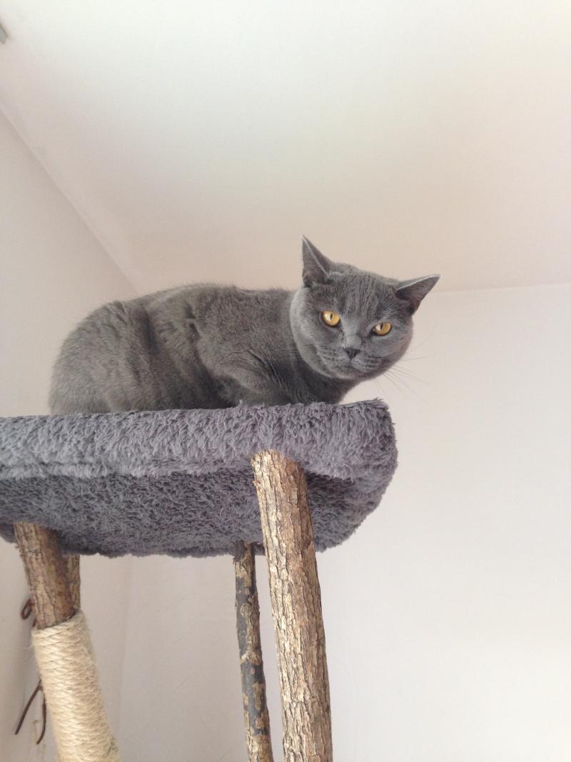 Miau... 2014-012