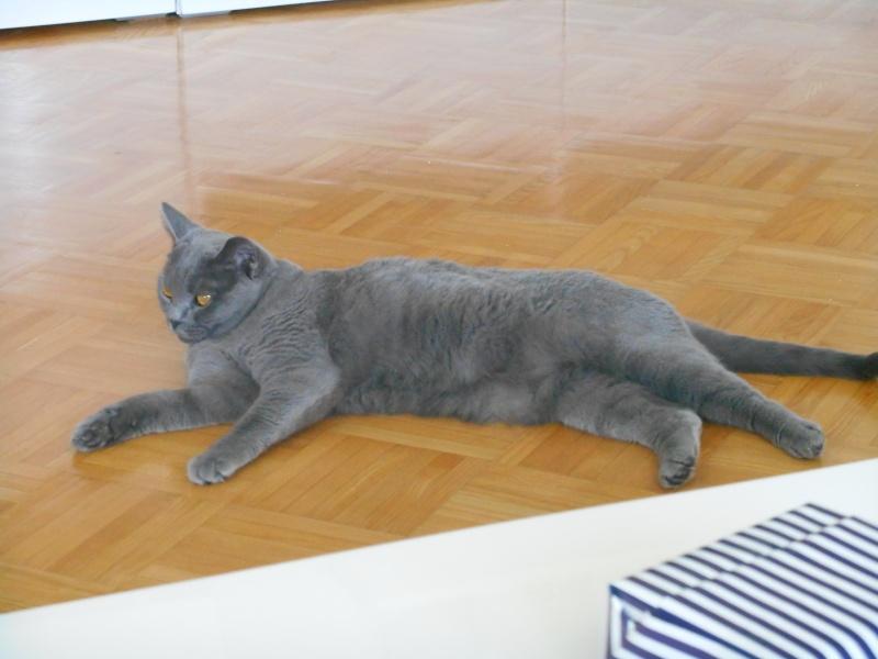 Miau... - Seite 2 2014-064
