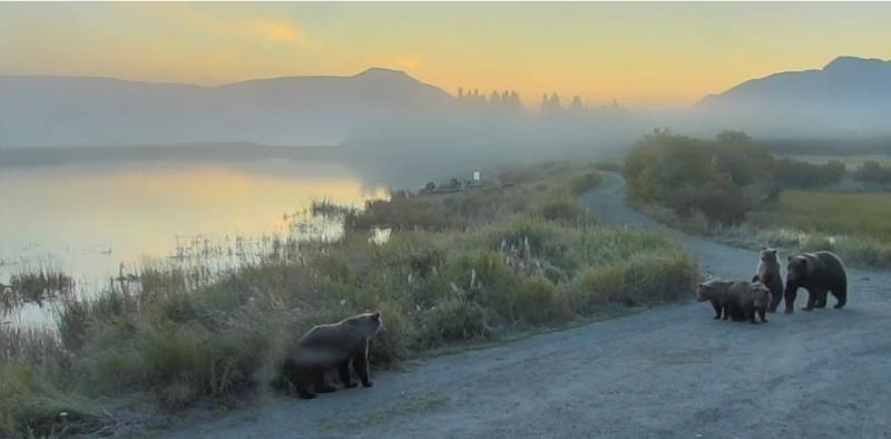 Wildtier-Livecams - Seite 2 Bildsc80