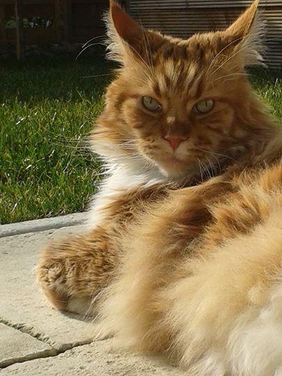 Miau... Dario11