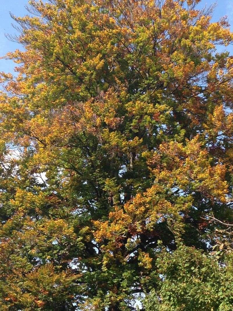 es herbstelt grad - Seite 3 Herbst14