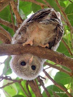 Wildtier-Livecams - Seite 38 Owl10