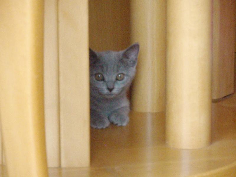 Miau... P8200213