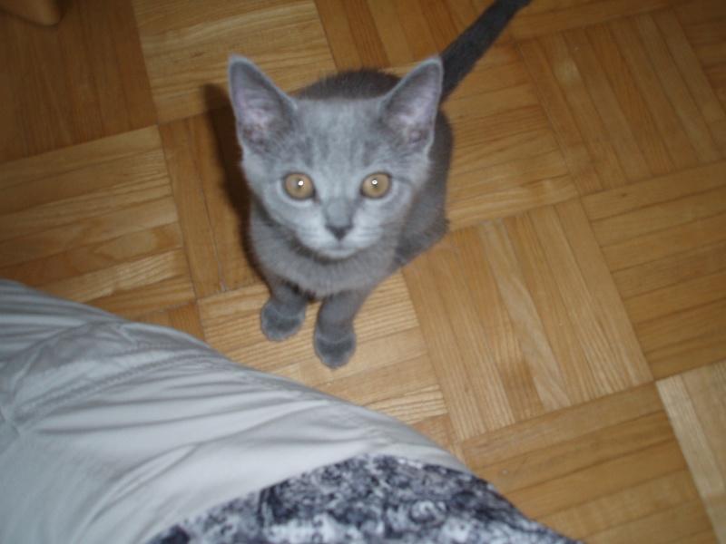 Miau... P8200214
