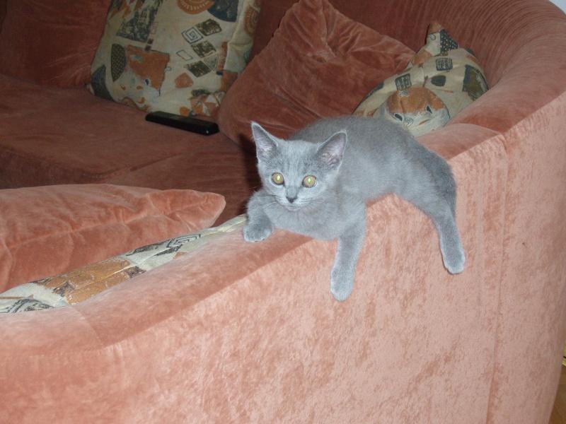 Miau... P8220211