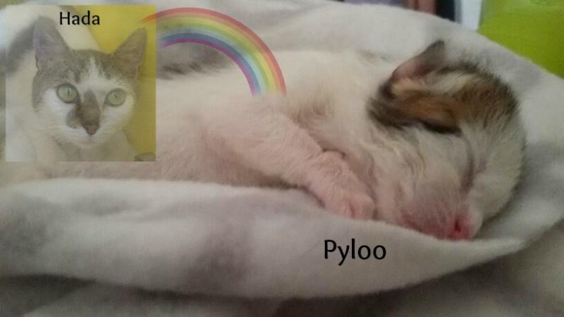 Pyloo, hijo de Hada 217_110
