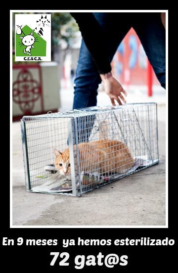 CESCA. La unión de Apa Sos Vitoria y Esperanza Felina por los gatos callejeros de Álava - Página 3 9_mese10