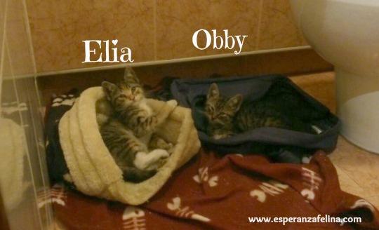 Obby y Elia Obby_y11