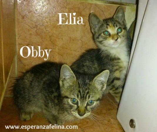 Elia en casa de Isabelto con Jazz, Flor y Valentina Obby_y12