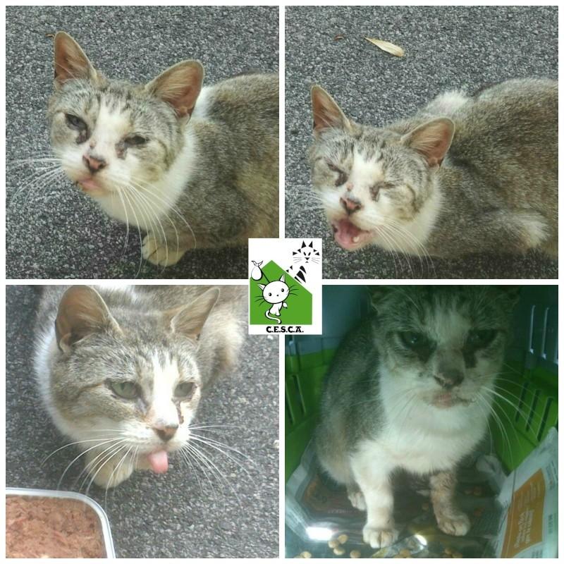 CESCA. La unión de Apa Sos Vitoria y Esperanza Felina por los gatos callejeros de Álava - Página 2 Picmon12