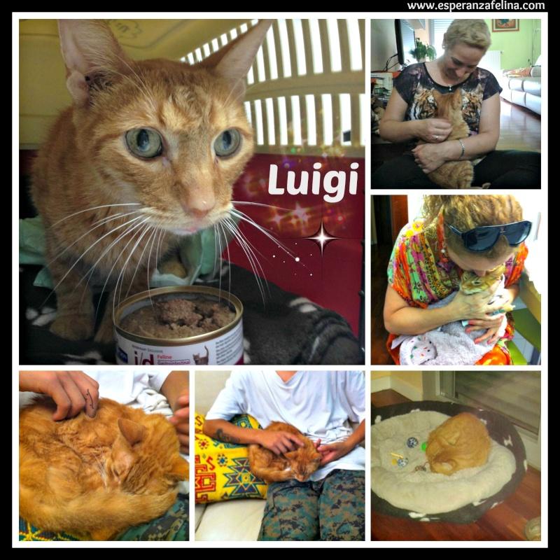 Luigi                        Picmon21