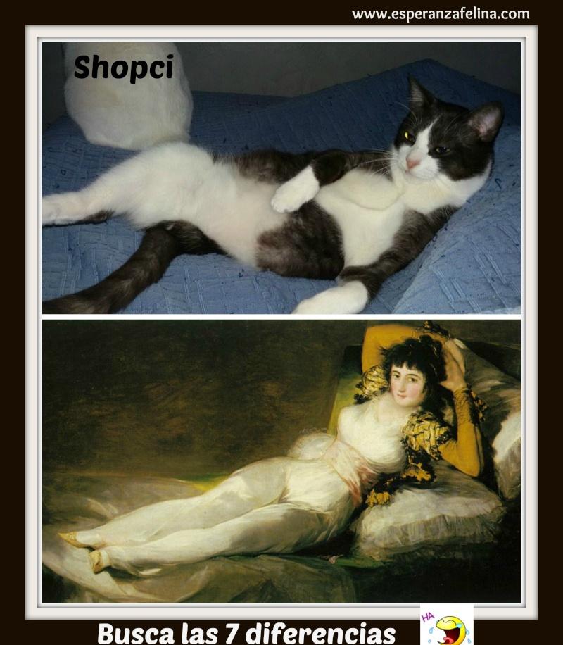 Shopci, Shopciable. El Gato. - Página 5 Picmon55