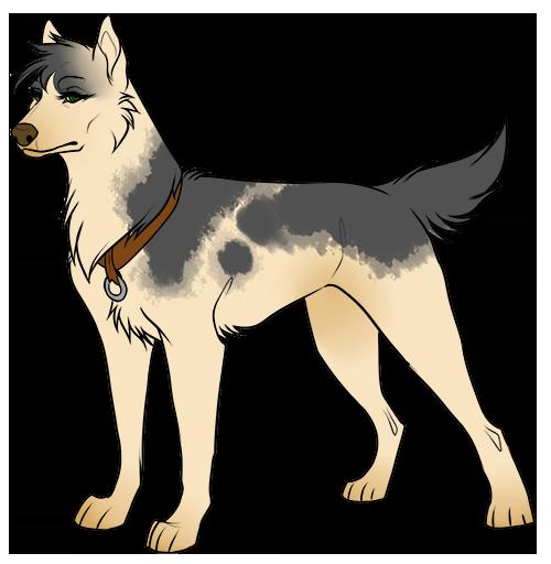 Shiva [Attelage] - Team Dog Shiva10