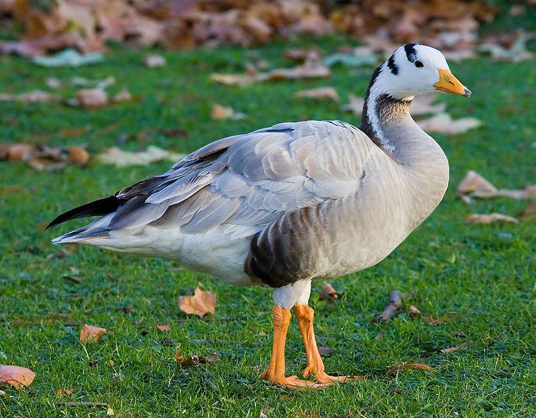 Curiosidades sobre animales que quizás no conocías Ansar_10