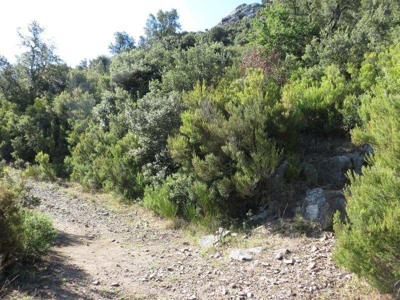 Le Pic d'Aureille de Laroque des Albères Img_0816
