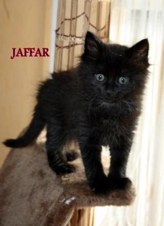 Juliette, Joke, Jaguar, Jaffar Downlo10