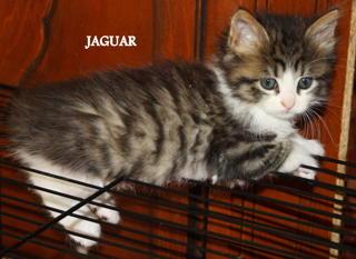 Juliette, Joke, Jaguar, Jaffar Downlo12