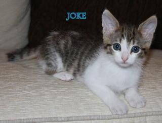 Juliette, Joke, Jaguar, Jaffar Downlo13