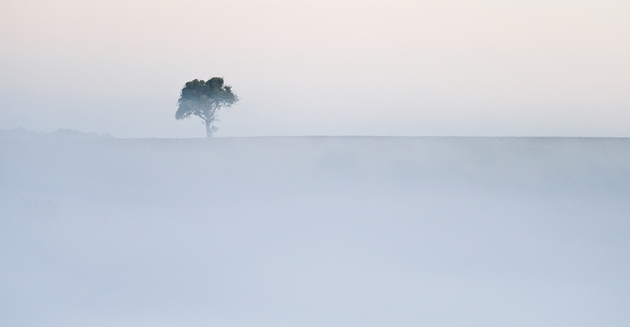 Lost Tree10