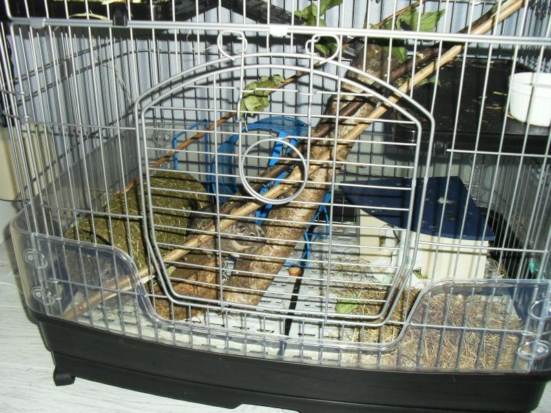Avis sur des cages Sam_0311