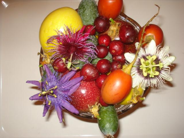 Feijoa ( Acca sellowiana ) la récolte a commencé   Fruit_10