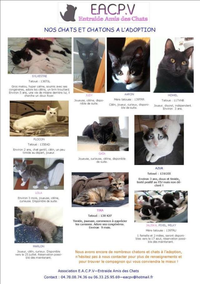 (69) EACPV Entraide amis des chats : Région lyonnais adoption Rhone alpes possible 10433810