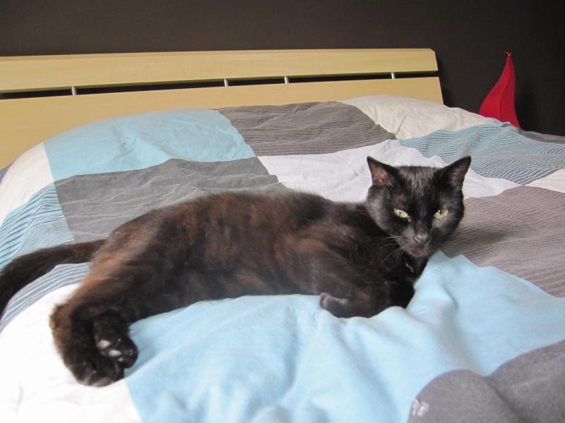 INZ0, chat européen, robe noire, né le 01/09/2013 Img_0037