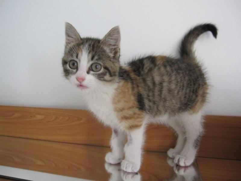JOANNE, chatonne européenne tricolore, née le 01/04/2014 Img_0122
