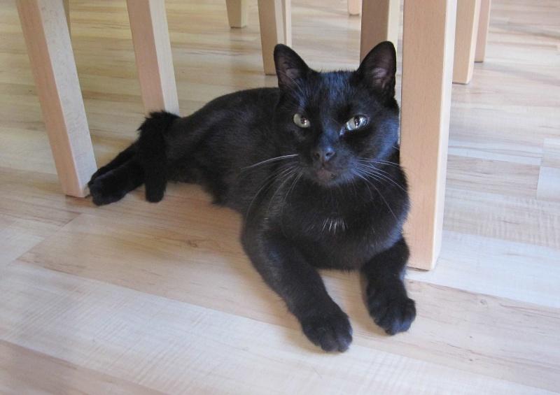 INZ0, chat européen, robe noire, né le 01/09/2013 Img_0131