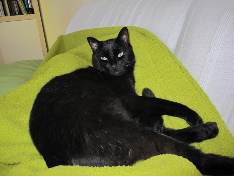 INZ0, chat européen, robe noire, né le 01/09/2013 Img_0146
