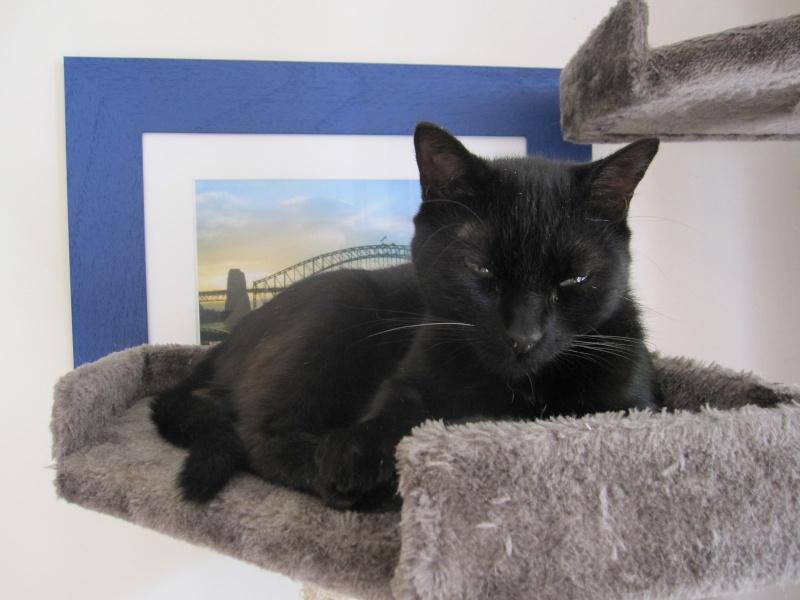 INZ0, chat européen, robe noire, né le 01/09/2013 Img_0149