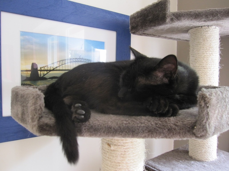 INZ0, chat européen, robe noire, né le 01/09/2013 Img_0150
