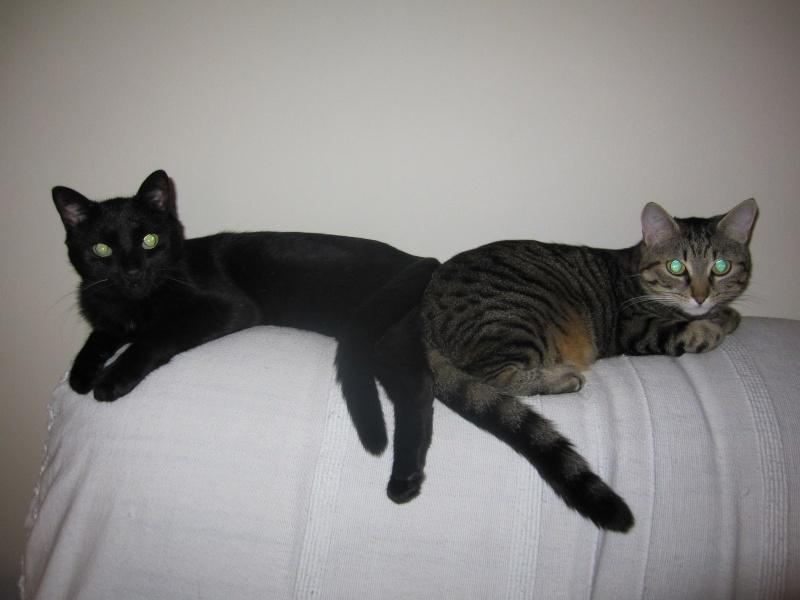 INZ0, chat européen, robe noire, né le 01/09/2013 Img_0151