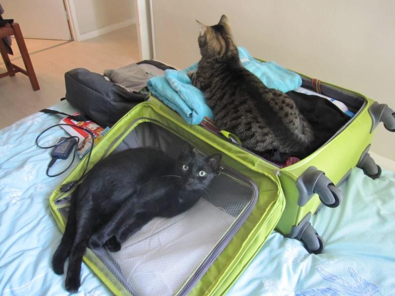 INZ0, chat européen, robe noire, né le 01/09/2013 Img_0221