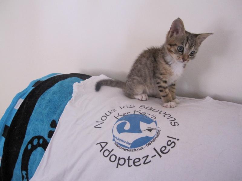 Junon, chatonne européenne tigrée et blanche, née le 19/06/14 Img_0319