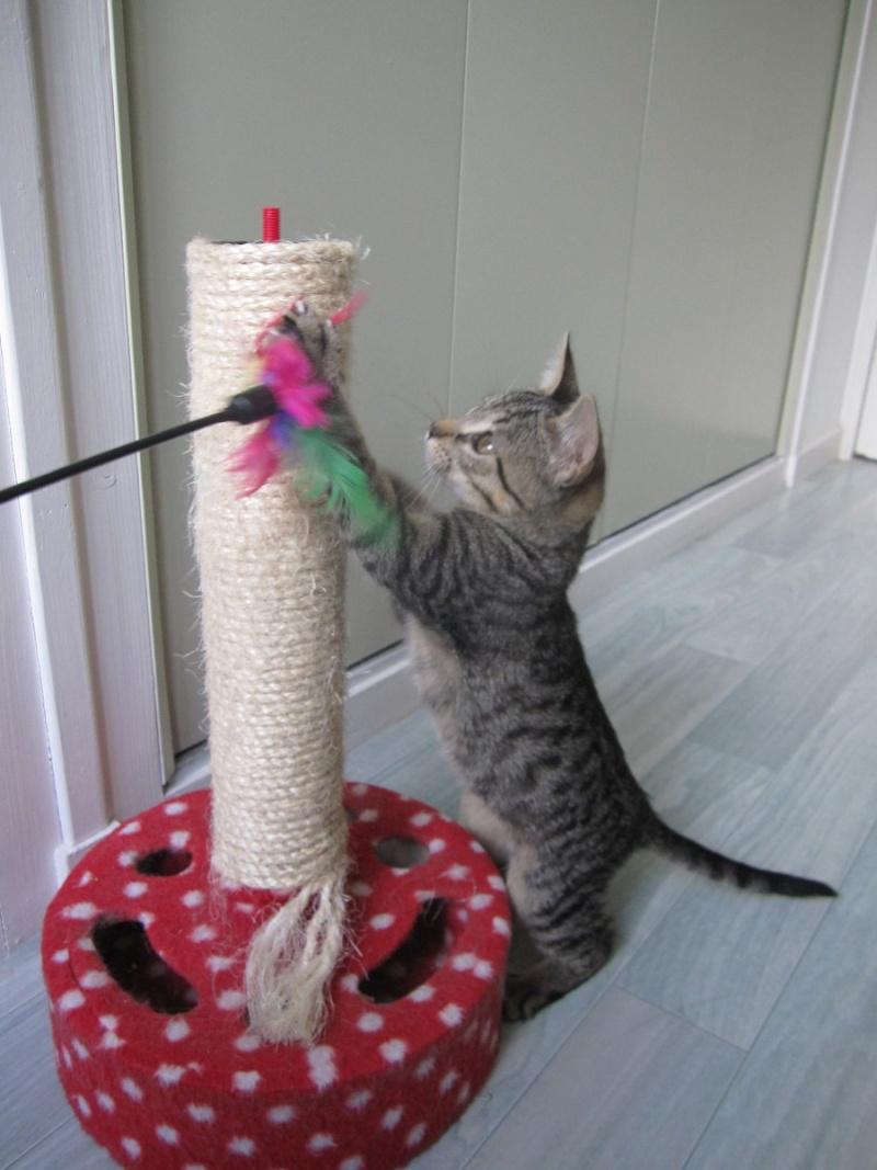Jewel, chatonne européenne tigrée, née le 25/05/14 Img_0329