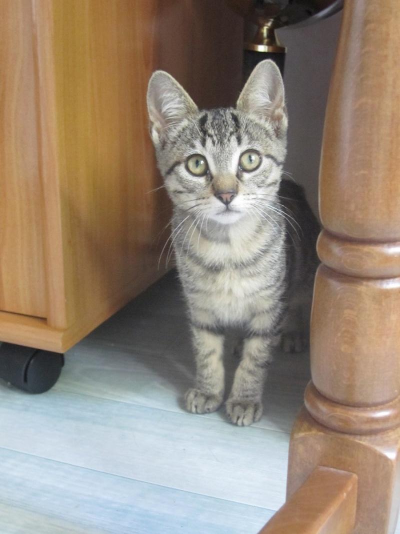 Jewel, chatonne européenne tigrée, née le 25/05/14 Img_0333