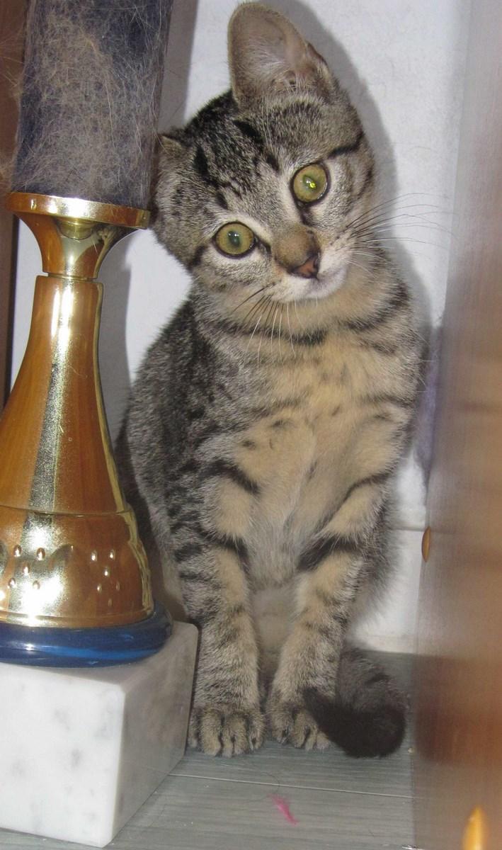 Jewel, chatonne européenne tigrée, née le 25/05/14 Img_0334