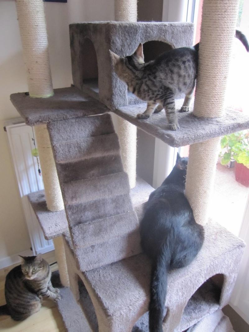 Jewel, chatonne européenne tigrée, née le 25/05/14 Img_0418
